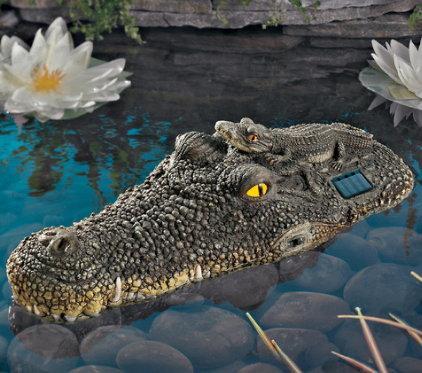 Crocodil solar