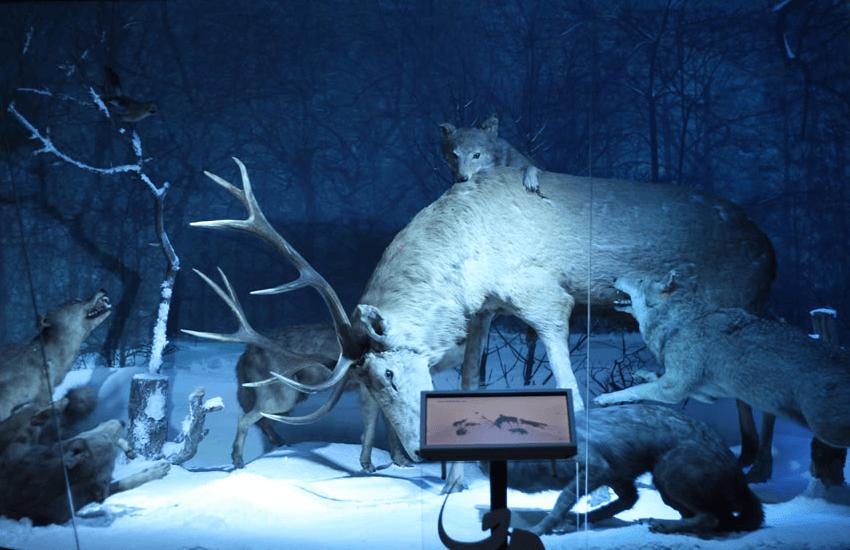 """Diorama din Muzeul Național de Istorie Naturală """"Grigore Antipa"""""""
